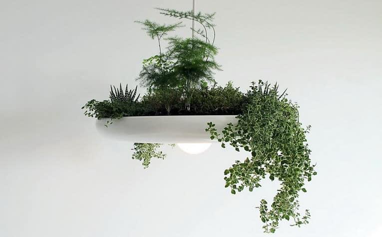 Подвесной сад: светильник и горшок для комнатных растений одновременно