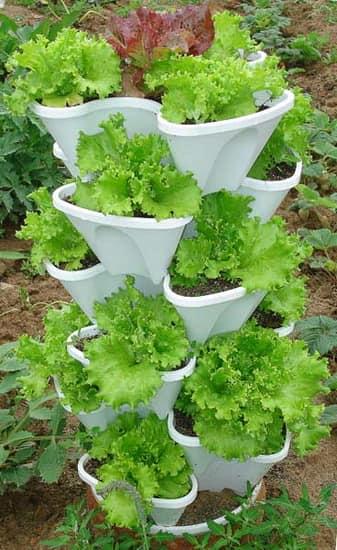 Пластиковая вертикальная грядка с салатом