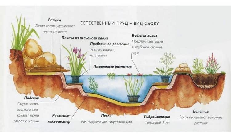 Какие растения посадить в пруду на даче