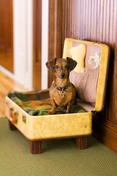 Обустраиваем место для питомца в старом чемодане