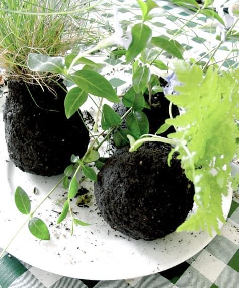 Сажаем растения в шарики грунта