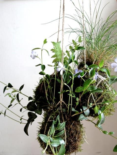 Готовый подвесной сад из земли, мха и растений