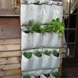 Сажаем растения