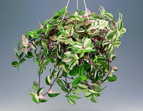 Подвесные сады из вьющихся растений фото
