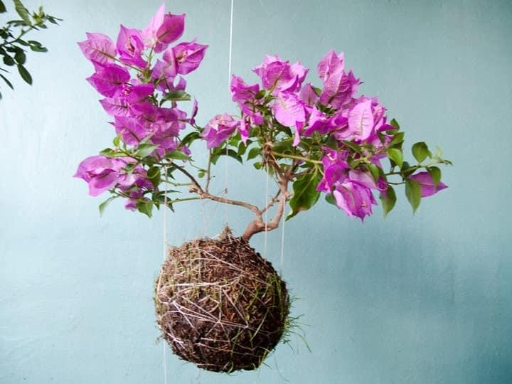 Цветы в подвесном саду в шариках фото