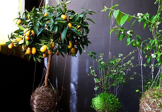 Что можно посадить в шариках из грунта и мха