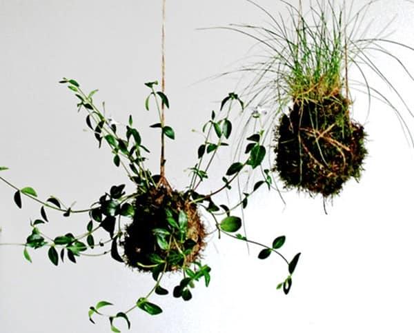 Подвесной сад из растений и шариков из земли и мха своими руками