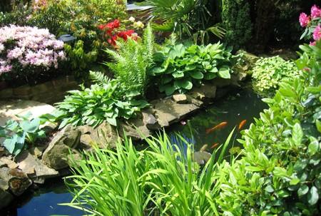 Садовый пруд с рыбками своими руками