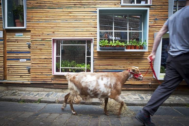 Да, в этом районе можно и живую козу увидеть