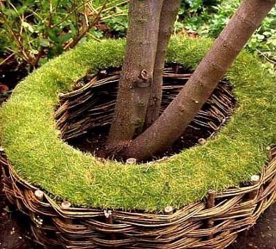 Плетеная скамейка вокруг дерева с живой травой