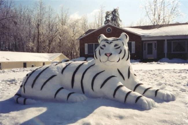 Лепим из снега тигра вместе с детьми