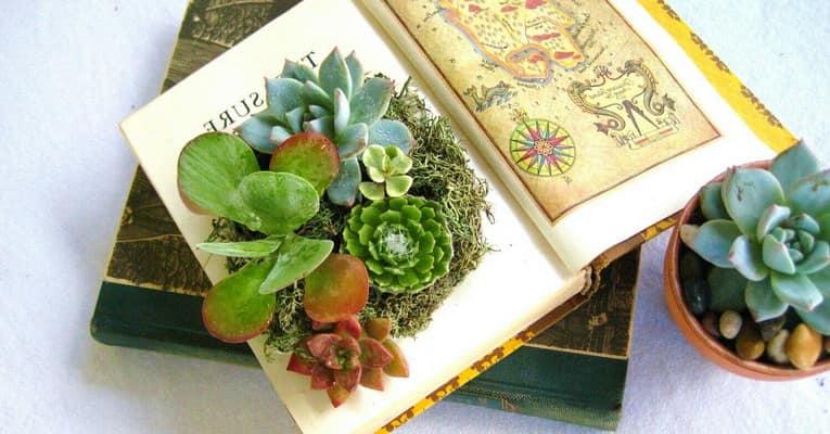 Как посадить суккуленты в книгу фото