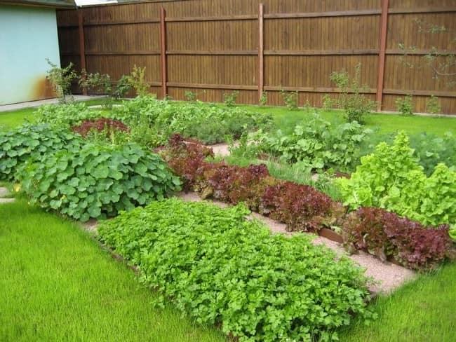 Декоративный огород в ландшафтном