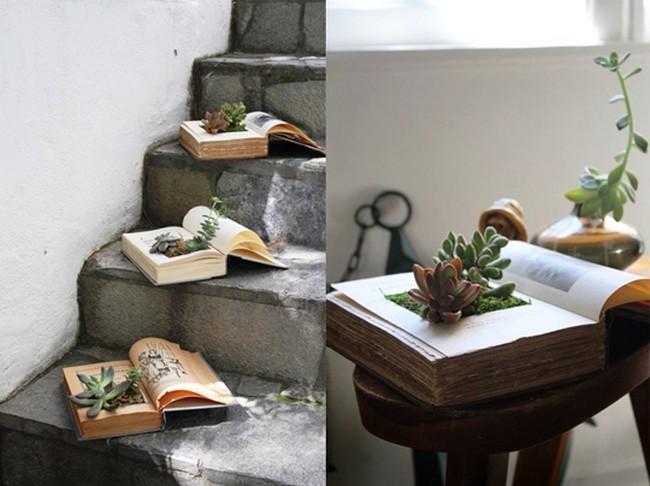 Уход за мини-садов из суккулент, растущих в книге фото