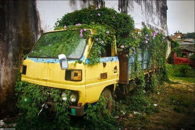 Зеленая клумба из старого грузовика