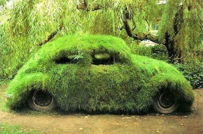 Клумба из машины: зеленый холм травы