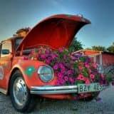 Цветы в машине