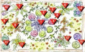 Подробная схема декоративного огорода