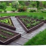 Треугольные грядки на огороде