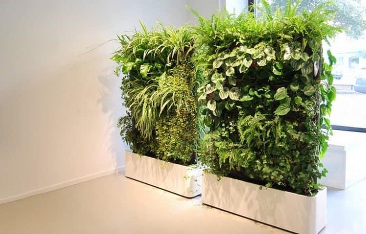 Зеленые комнатные растения в интерьере фото
