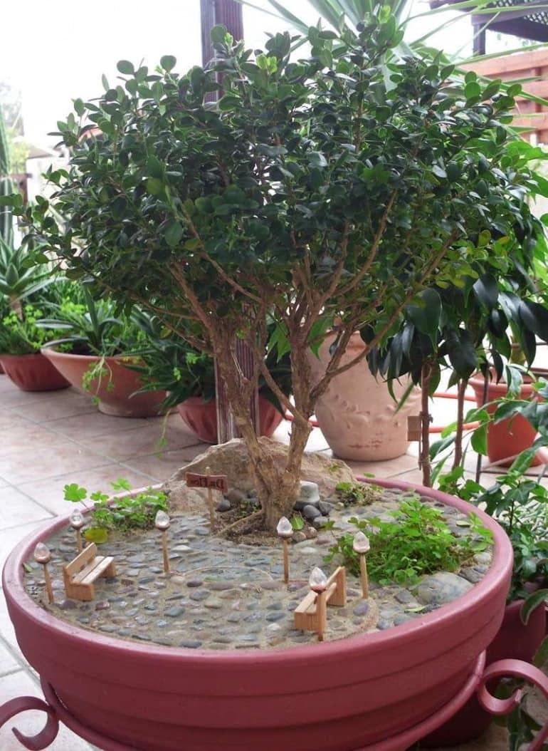 Миниатюрный сад - уменьшенная копия уголка в парке