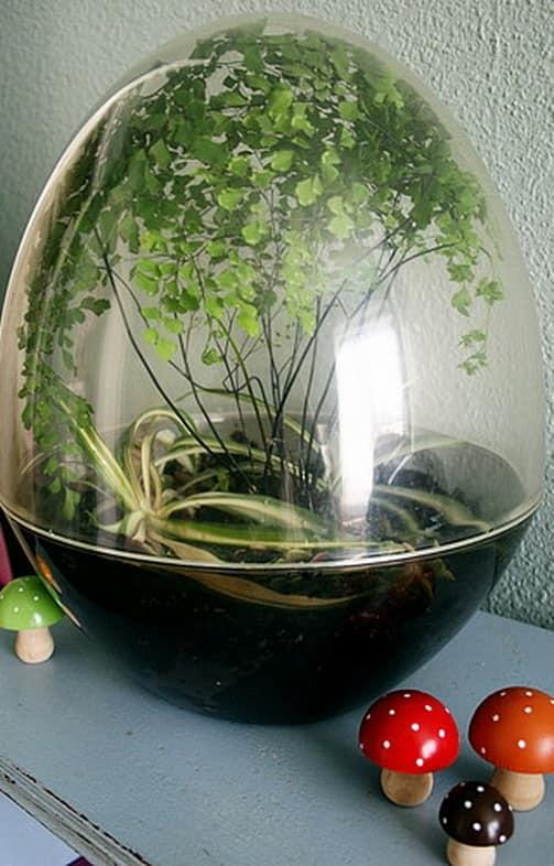 Миниатюрный сад - закрытый флорариум