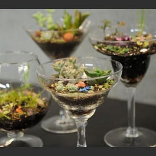 Миниатюрные сады в бокалах