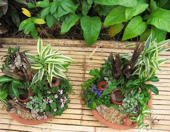 Мини сады в плошках