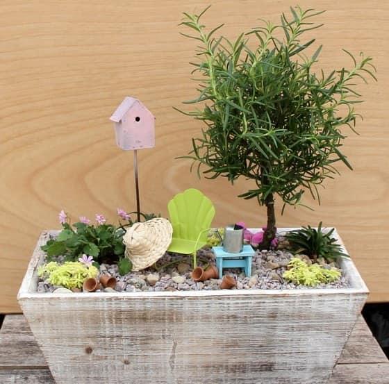 Миниатюрный сад в ящике - живые растения и аксессуары