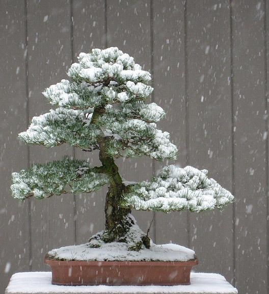Миниатюрный сад - бонсай