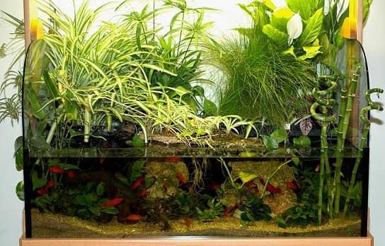 В поллюдариуме мирно сосуществуют растения и животные
