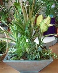 Контейнер поможет собрать различные растения в одном месте