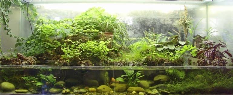 Поллюдариум представляет собой биотоп болота в миниатюре