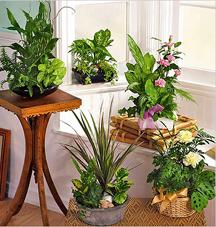 С помощью контейнера в квартире можно организовать мини-сад