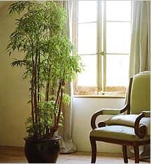 Растение-солитер должно хорошо смотреться на растоянии