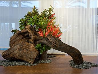 Такая интересная композиция  включающая в себя растения и корни или стволы деревьев называется рутарий