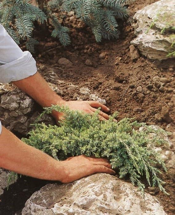 Посадка растений в альпинарии: фото