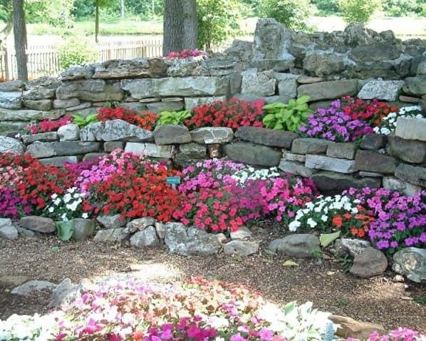 Яркие цветы для альпинария в саду