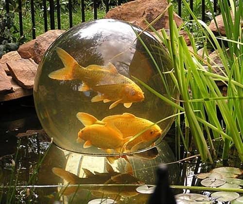 Садовый аквариум сфера для декора сада