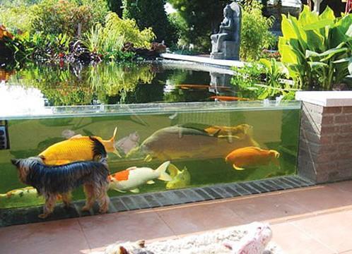 Садовый аквариум своими руками фото