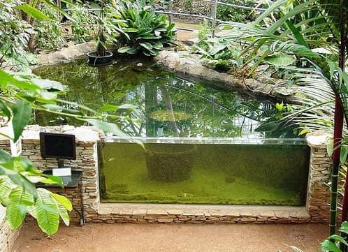 Пруд-аквариум на дачном участке фото
