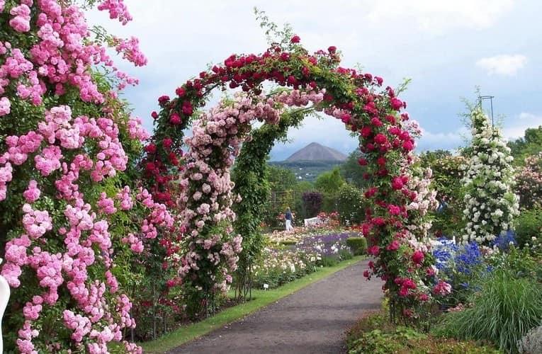 Украшаем сад арками с плестистыми розами: делаем своими руками фото
