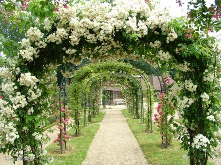 Цветущие садовые арки своими руками для декора вашего участка