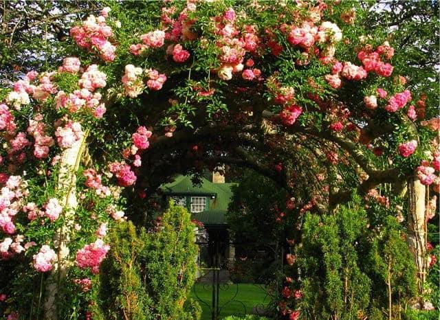 Садовые арки из деревьев фото