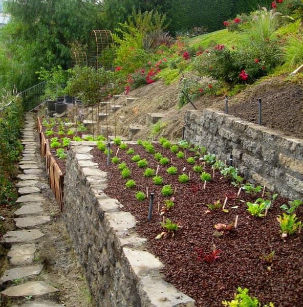 Ограждение для грядок на террасированном огороде