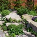 Альпинарий и хвойные растения