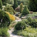 Красивый сад с хвойниками