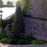 Хвойные растения у стены дома