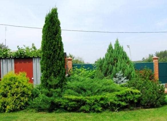 Вечнозеленая клумба из хвойных растений в ландшафтном дизайне фото