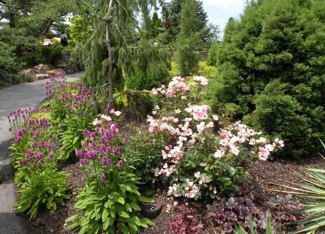 Миксбордеры: смешанные цветники с хвойными растениями